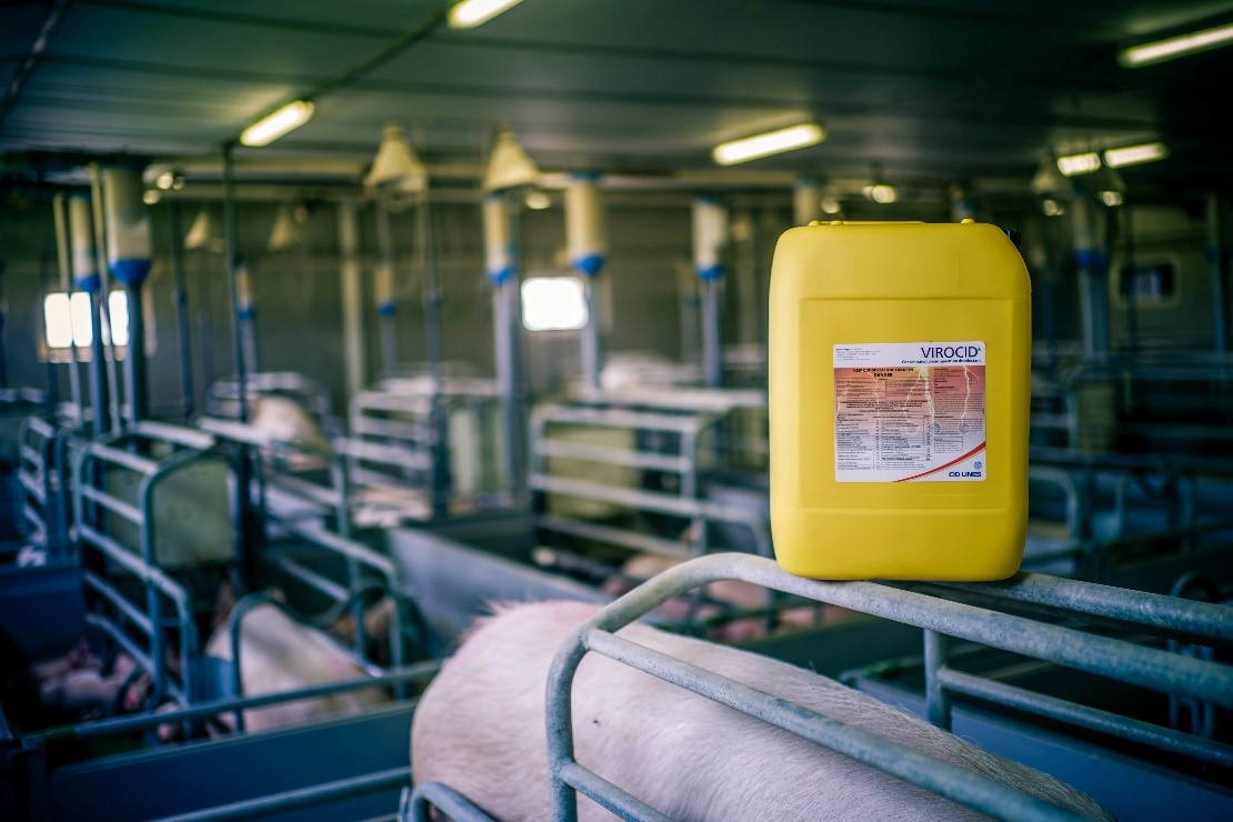 The hygiene factor in sustainable pig production | CID LINES