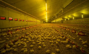 Critical points on the poultry farm: Daily operations