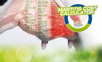 Mastitis: One of the most expensive disease for dairy farmers!